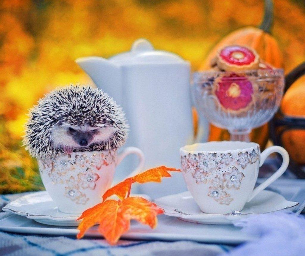 Картинка доброе утро прекрасного дня прикольные